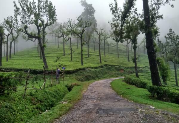 Manjolai Hills Tamil Nadu